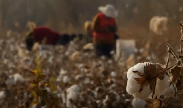 China Slaves Cotton